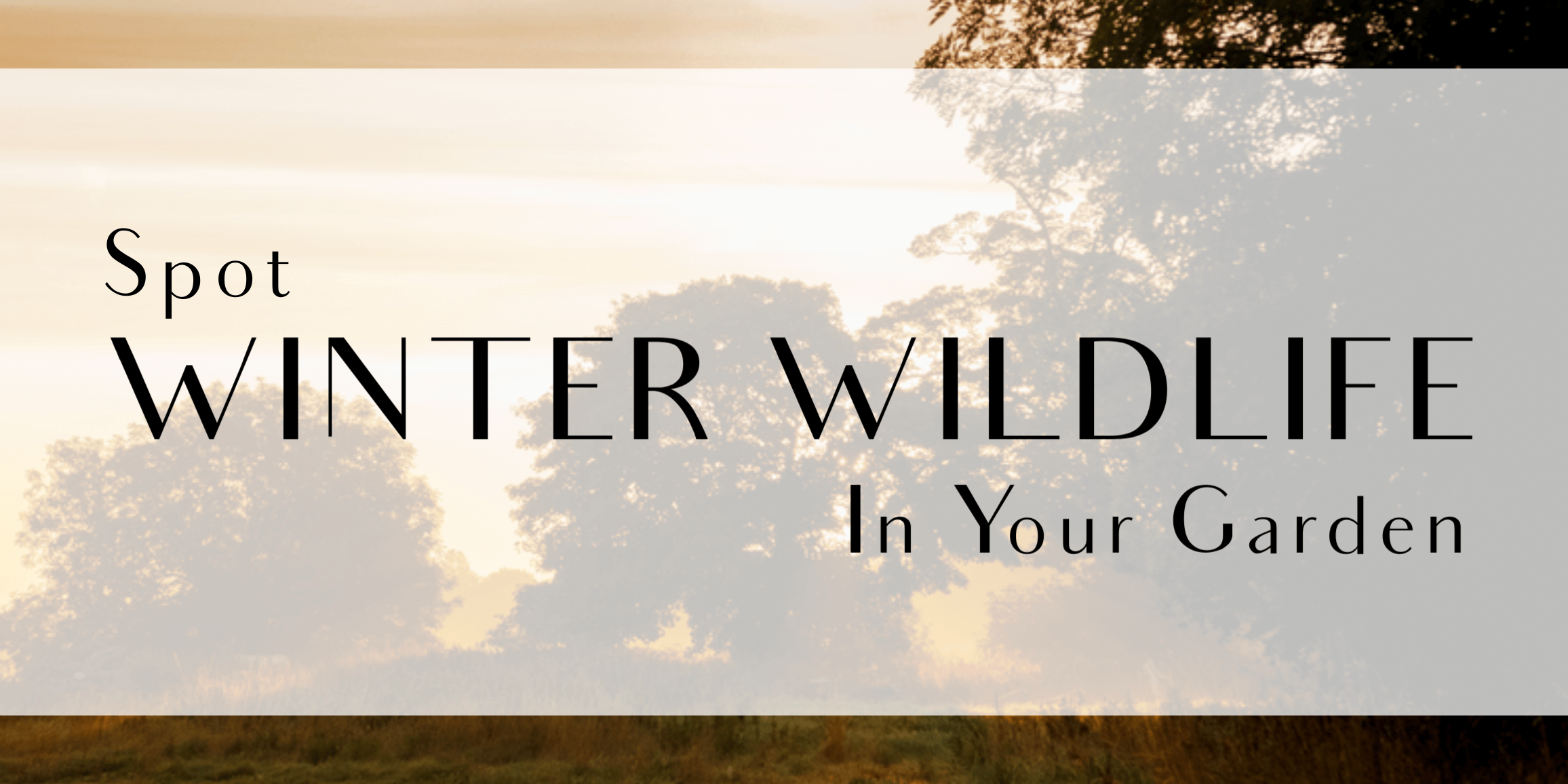Spot Winter Wildlife in your Garden title
